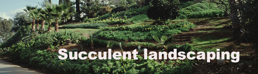 Hillside covered with succulent ground cover and hedges in Escondido CA. Photo by Anders Tomlinson.